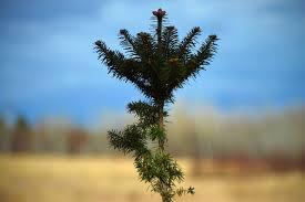mitchell family christmas tree farm mitchell family christmas