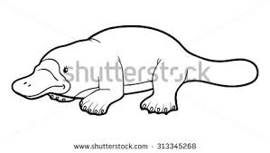 platypus coloring pages duck billed platypus stock images royalty free images u0026 vectors
