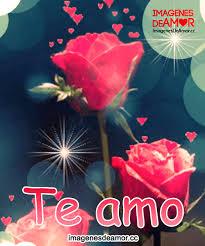 bonitas de rosas rojas con frases de amor imagenes de amor facebook de rosas rojas con frases te amo y me gustas