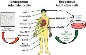 emerging use of stem cells in regenerative medicine biochemical