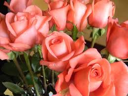 Different Color Roses Roses Are Red Or Coral Newly Wife Healthy Life