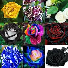 Cheap Flower Seeds - wholesale lovely colors rose green rose flower seed 100 seeds