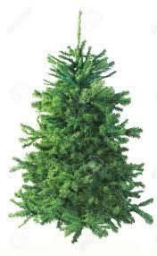 christmas tree fir christmas lights decoration