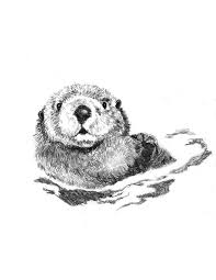 214 best ollie the otter images on pinterest how to draw otters