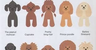 pictures of poodle haircuts huxtable the poodle toy poodle blog parti poodle japanese