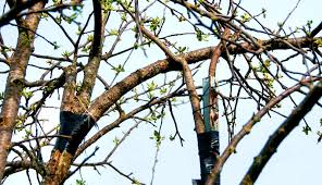 repair broken fruit tree branches yourself hobby farms