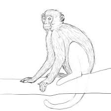 how to draw a monkey drawing factory