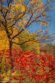 fall color minnehaha falls minneapolis exploration vacation
