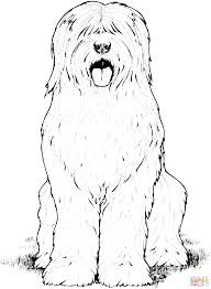 old english sheepdog coloring page free printable coloring pages