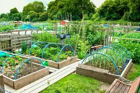 Raised Bed Gardens Ideas Hedgerow Bird Shelter Or Magnet Design Free Landscape Plans Figure