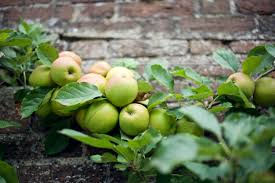 10 easy pieces u pick orchards gardenista