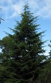 list of u s state and territory trees
