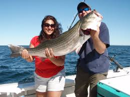 striper fishing cape cod fishing charters
