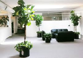 plants for office 5 easy to grow plants for office gardening gp claims