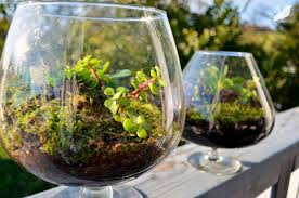 best terrarium plants my journey