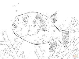 fish coloring pages printable puffer fish coloring page puffer fish coloring page free printable