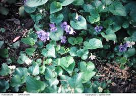 native plant landscaping in new england perennial shade gardens perennials