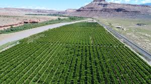 income producing orchard on river for sale in western co u2013 land for