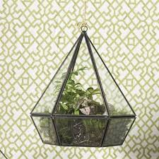glass terrarium for succulents and plants shelley b home and