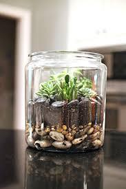 succulent terrarium picmia