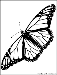 fabulous monarch butterfly coloring page coloring page and
