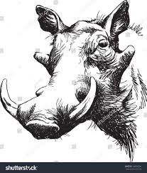 black white vector line drawing warthogs stock vector 168902294