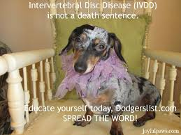 put dog to sleep there is for dogs with intervertebral disc disease ivdd