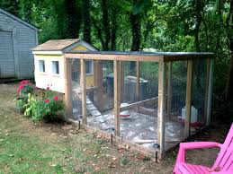 Backyard Chickens Com by The Coop