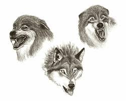 growling wolf designs 94827 newsmov