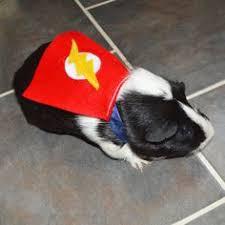 Hamster Halloween Costumes Avengers Captain America Costume Hamster Guinea Pig Chinchilla