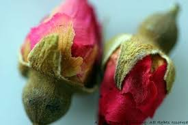 Where Can I Buy Rose Petals Rose Petals And Yoghurt With Fruits U2013 A Life Time Of Cooking