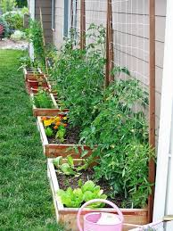 raised vegetables beds against a wall or fence with trellis