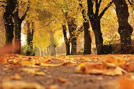 Autumn Colors Fall Leaves Why Do Leaves Change Color In The Fall The Old