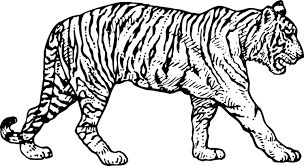 vintage tiger coloring page tigers coloring pages excellent