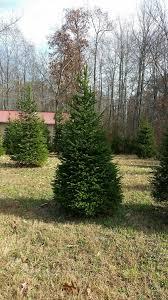 culpeper tourism peper u0027mint christmas tree farm