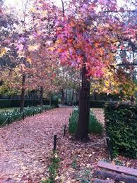 Auburn Botanical Garden Autumn Colours Picture Of Auburn Botanic Gardens Auburn