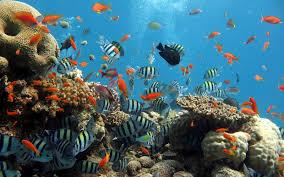 hd wallpaper of sea animals