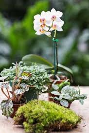 best 25 best terrarium plants ideas on pinterest indoor plants