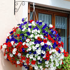 Winter Flowers For Garden by Red White And Blue Hanging Basket In My Garden Pinterest