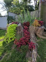 this giant tree stump turned beautiful garden mildlyinteresting