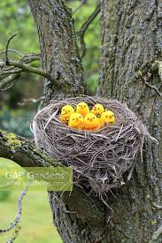 gap gardens artificial birds in nest in tree image no 0241960