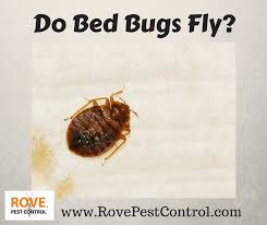 Wisconsin How Do Bed Bugs Travel images Do bed bugs fly rove pest control png