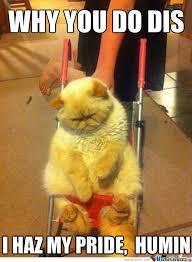 Depressed Cat Meme - depressed cat is depressed by snajath meme center