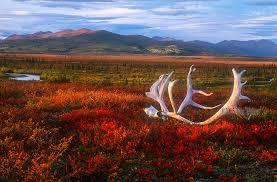 Alaska Landscapes images Alaska landscapes photography jpg