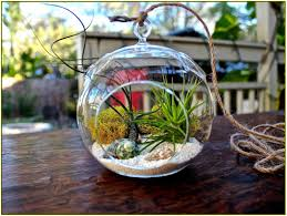 terrarium coffee table home design ideas