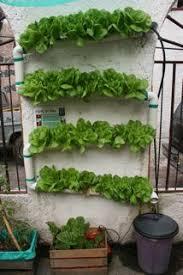 indoor vertical wall garden keysindy com