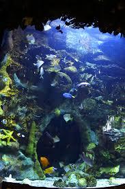 Beautiful Home Fish Tanks by 98 Best Aquariums Images On Pinterest Aquarium Ideas Fish