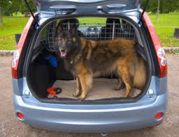 How Do Blind Dogs Know Where To Go Traveling With Your Pet Faq