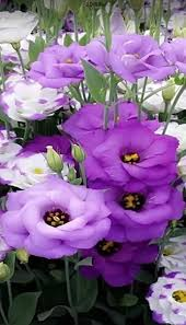 1800 best flores images on pinterest nature plants and flower