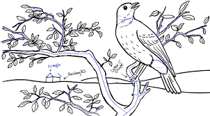 bird tree drawing pencil and in color bird tree drawing